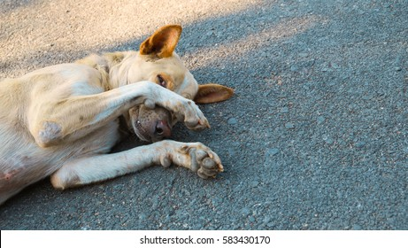 The dog is sleeping on cement background, The dog is sleeping on the road. The dog is shy.