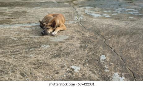 Dog sleeping on a cement floor