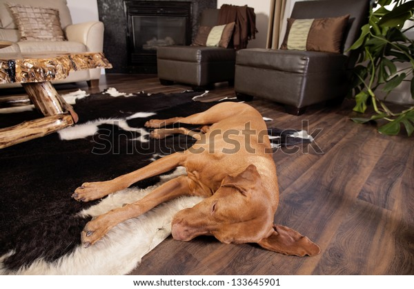 dog sleeping on the floor of the living room