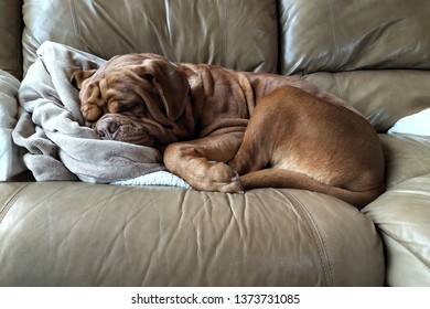 dog sleeping on furniture