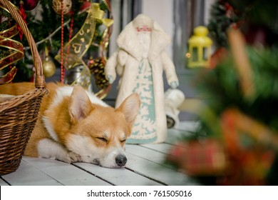 A dog sleeping on a porch under a Chrismtas tree