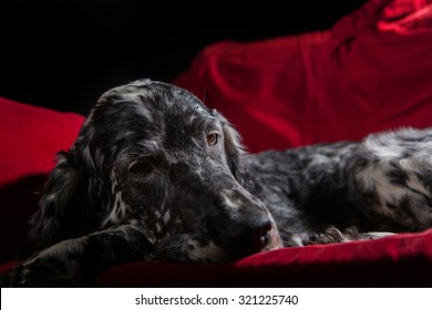 dog sleeping on the  red couch