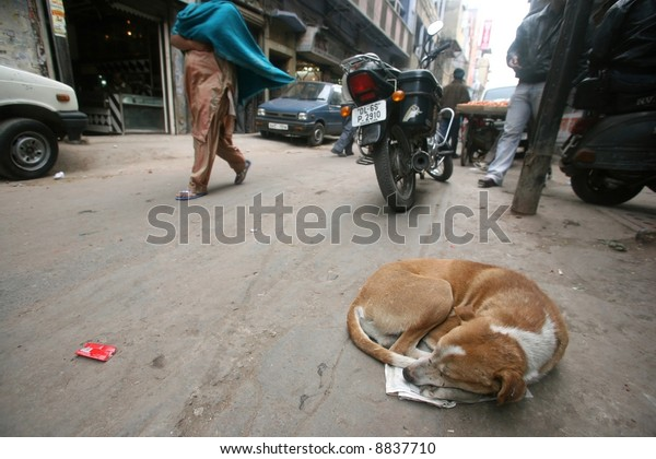 dog sleeping on roadside, delhi, india
