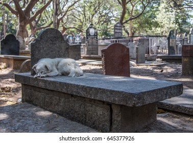 A dog sleeping on a unmarked grave in a graveyard during the hot mid day ours in Bangalore,India.