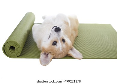 Dog sleeping on a yoga mat, isolated on white background