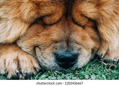 Dog sleeping outside