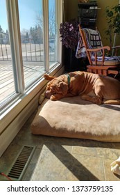 dog sleeping in sunshine by window