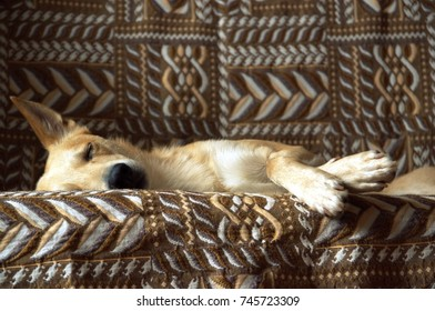 the dog sleeps on the couch