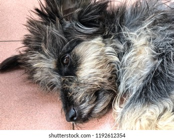 The dog sleepy