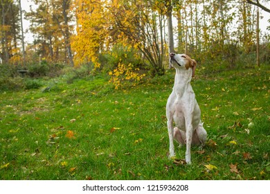 Dog smelling the fresh autumn air on a late afternoon in a garden.