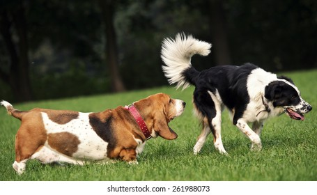 Dog smells another dogs behind