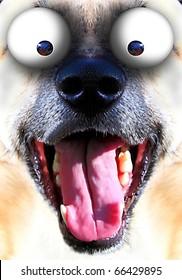 dog smile and bulging eyes