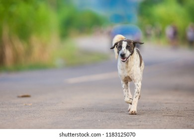 Dog is smile and running