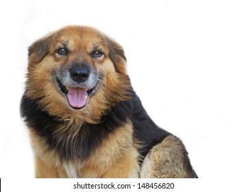 dog smiling at the camera