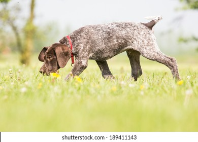 Dog is sniffing