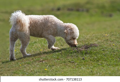 Dog sniffing the grass