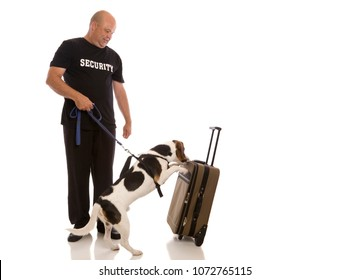 A dog sniffing luggage on white.