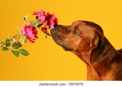 dog is sniffing on flower