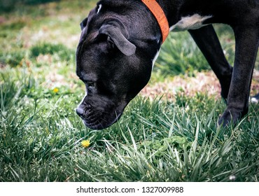 Dog Sniffing Outside