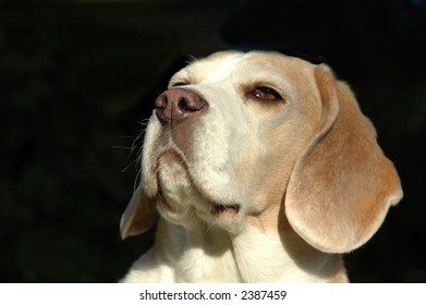 Dog is sniffing sent in the air.
