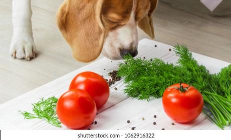 Dog sniffs raw vegan food. Healthy food background.