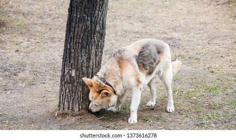 the dog sniffs the tree, walking pet.