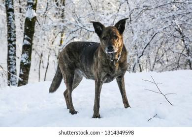 dog in snow,