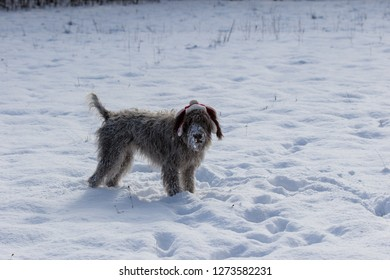 Dog in the snow in a trapper hat