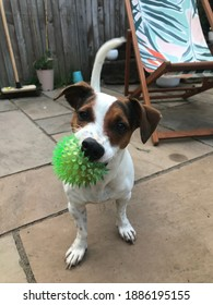 Dog with spiky green ball in yard
