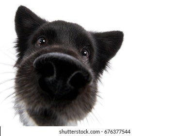 Dog spitz mongrel head with big nose funny wide angle