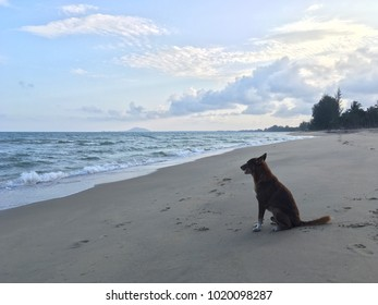 The dog stand and see the beach waiting for someone on blue sky and sea. Valentine's day concept.