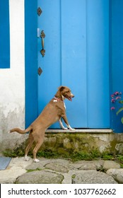 dog standing at a blue door