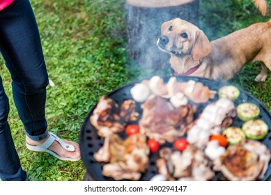 Dog standing close to barbecue and looking up to owner