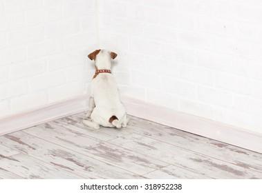 Dog standing in the corner. Chastened puppy. punishment