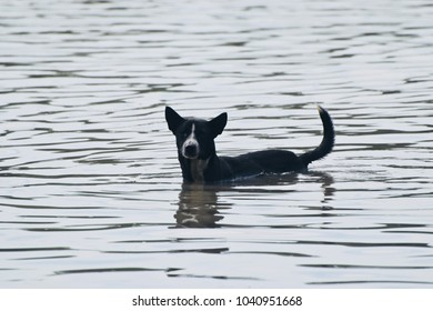 A dog is standing  in the flood water unique stock photo