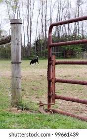 Dog standing in gated field
