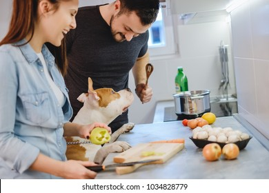 Dog standing up in the kitchen while couple is laughing while trying to prepair food