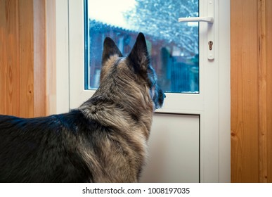 A dog standing and looking through the glass door, a winter landscape in the background