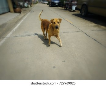 Dog standing in the middle of the street.