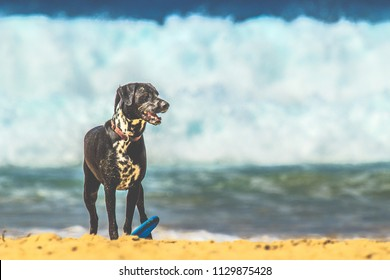 A dog standing next to a frisbee on the beach on a summer's day