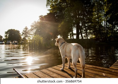 A dog is standing on the deck beside the lake.