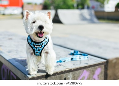 Dog standing on ramp in skate park, copy space