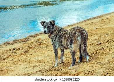 the dog is standing on the sand near the river