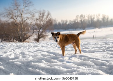 Dog is standing on a snow alone