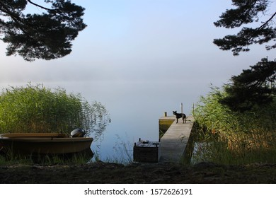 Dog standing on wooden pier by Finnish misty sea, boat on the beach.