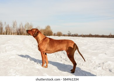 Dog standing in the snow