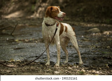A dog standing in the stream