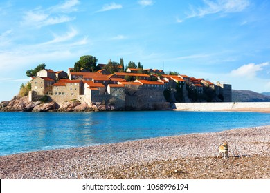 A dog stands on the beach in the background of Sveti Stefan island in Budva