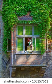Dog staring at window with ivy over wall