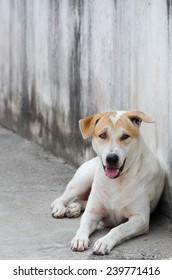 Dog stay in shady on sidewalk